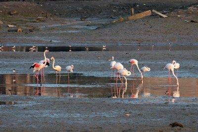 Pink Flamingos, Mandvi