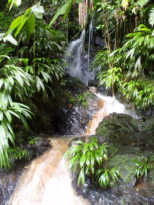 Flowing water in the Rainforest