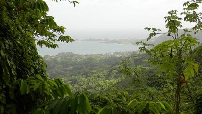 Rainforest hike.