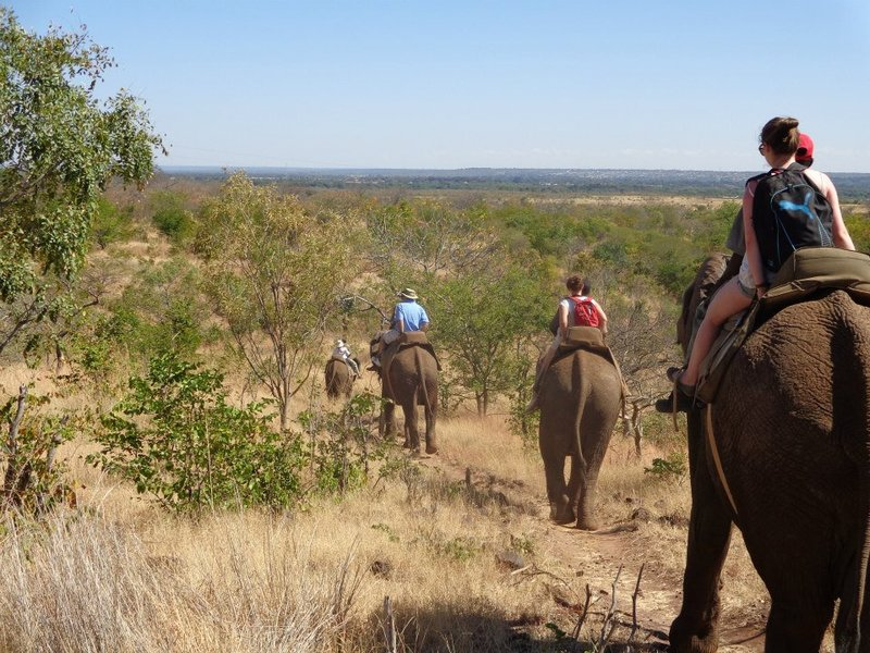Elephant Safari just outside of Livingstone