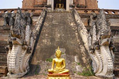 Buddha and Elephants