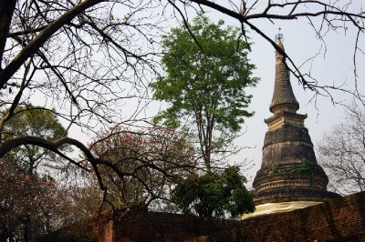 Chedi and Trees