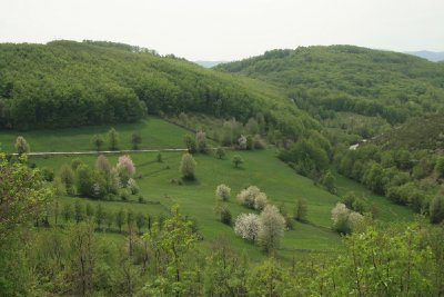 Zlatibor meadow