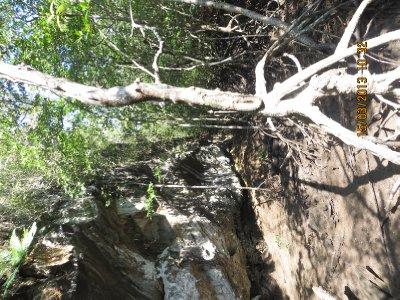 Mangroves & Monkey tour