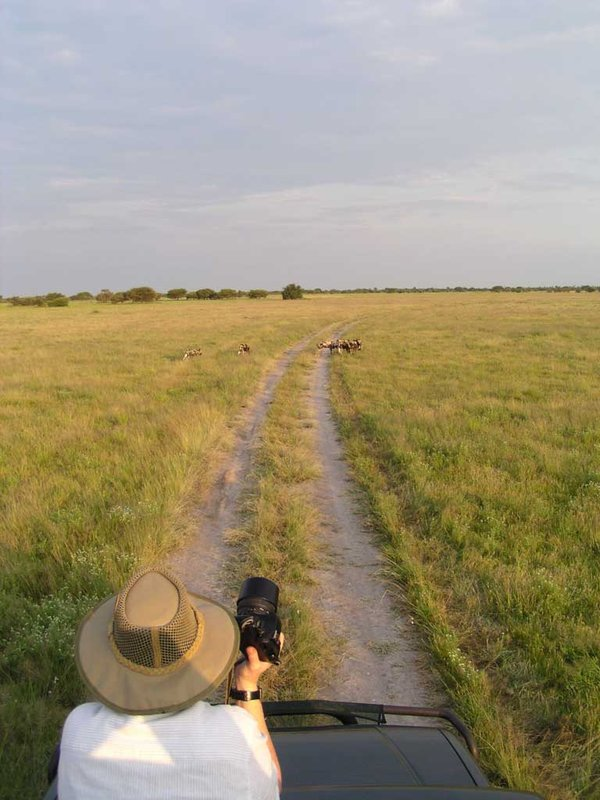 Following Wild dog
