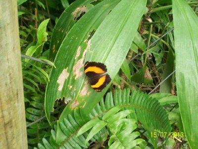 Butterfly Enclosure - Kuranda