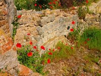 Poppies at Roman villa, Milreu