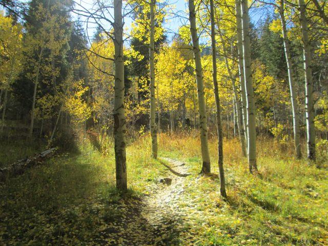 Mink Creek Trail