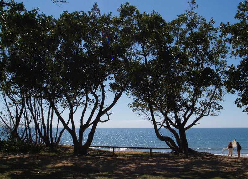 Skydiving - trees at Mission Beach