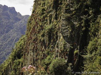 Bromeliad Cliff