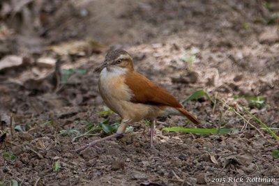 Day 27-Oven Bird