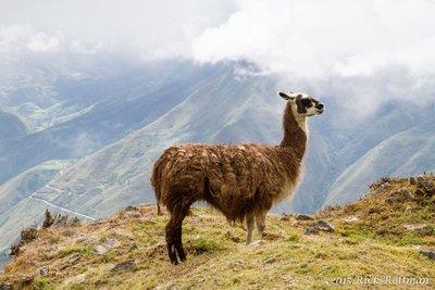 Day 38-Standing Llama 2