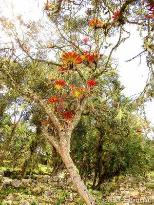 Day 38-Wild Bromeliads