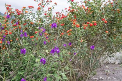 Day 40- Huembo Flowers