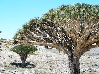 Socotra - Yemen