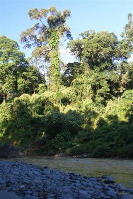 IMG_6018 Danum River