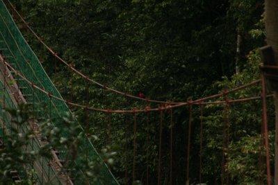 IMG_6032 Canopy walkway
