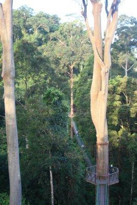 IMG_6095 Canopy walkway