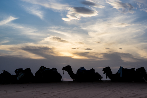 large_Morocco-6274.jpg