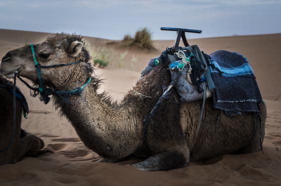 large_Morocco-6282.jpg