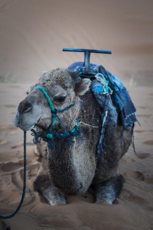 large_Morocco-6284.jpg