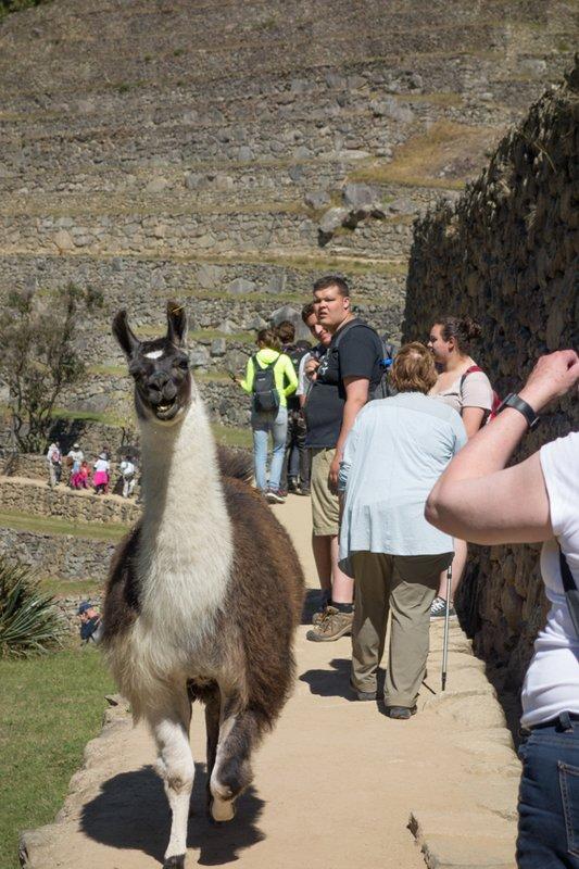 large_Peru_Sony__3039_of_60_.jpg