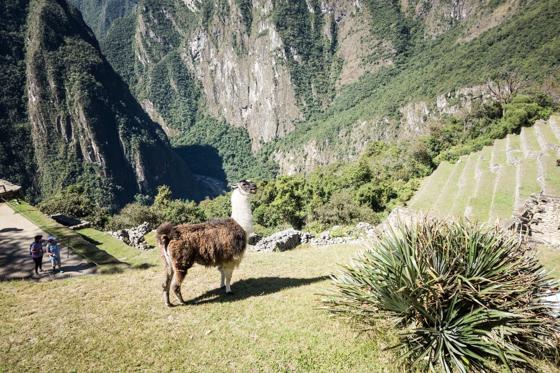 large_Peru_Sony__3049_of_60_.jpg