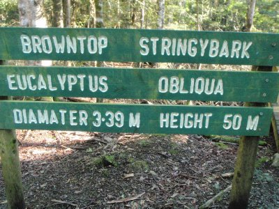 Tall stringybark sign