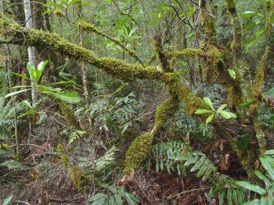 Moss... Lots of moss!