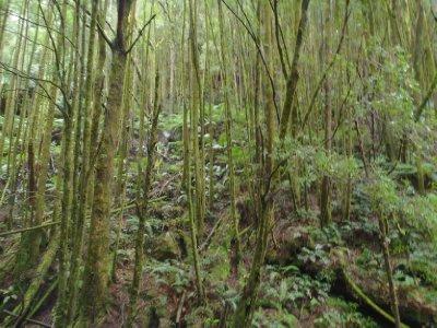 Rainforest of moss