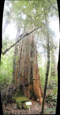 Stringy bark on Keogh's Creek Walk