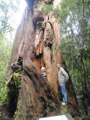 Enjoying a big tree on Keogh's Creek Walk