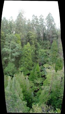 Trees filling deep valley