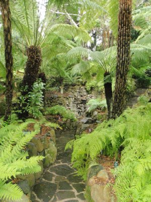 Fern alcove, Royal Tasmanian Botanical Gardens