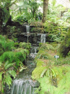 Waterfall in the Royal Tasmanian Botanical Gardens