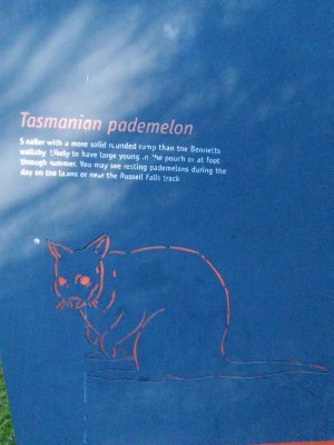 Pademelon sign