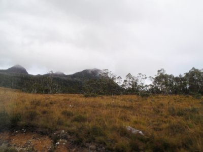 Grassland and dry forest