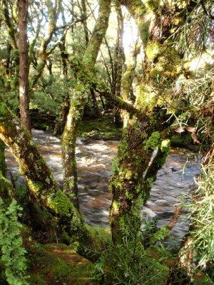 Enchanted walk creek