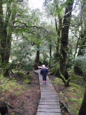 Sonia on the walk to Knyvet falls