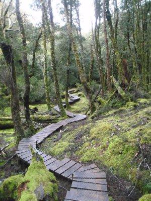 Boardwalk to Knyvet Falls