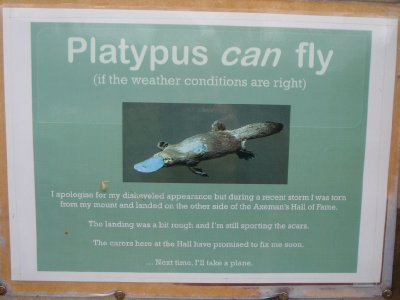 Flying platypus!
