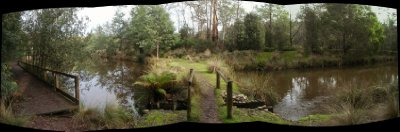 Warrawee Forest Reserve panorama
