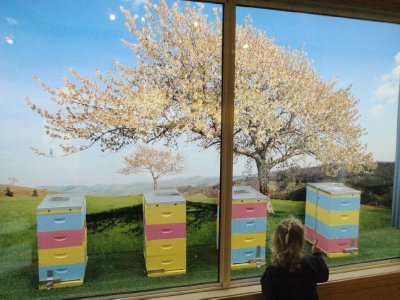 Viewing window to outside hives