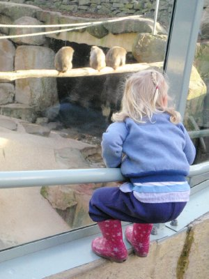Sonia watching the monkeys