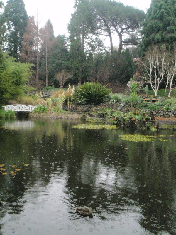 Lily Pond in the Royal Tasmania Botanical Gardens
