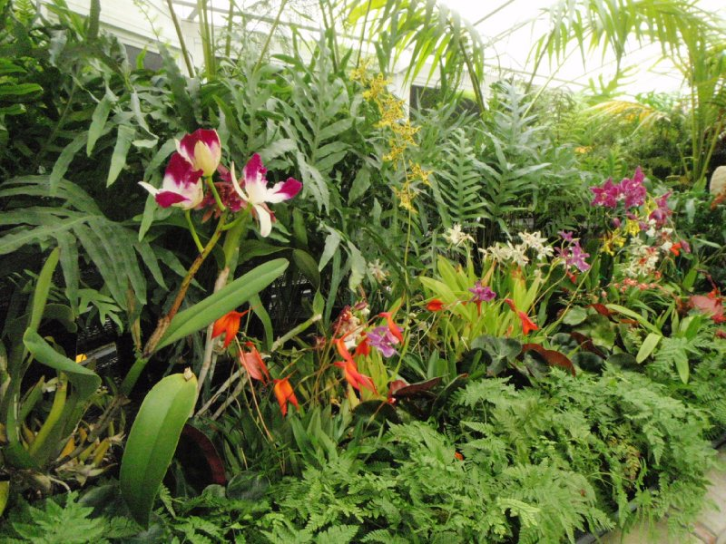 Orchids, Royal Tasmanian Botanical Gardens