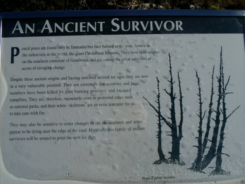 Ancient Survivor