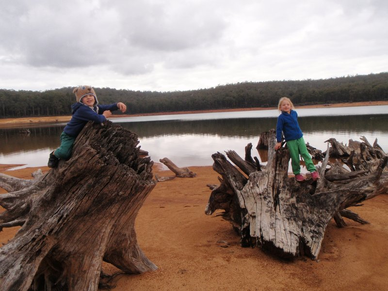 Tree stump fun