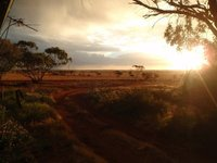 Morawa farm sunset