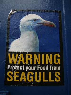 Seagull warning